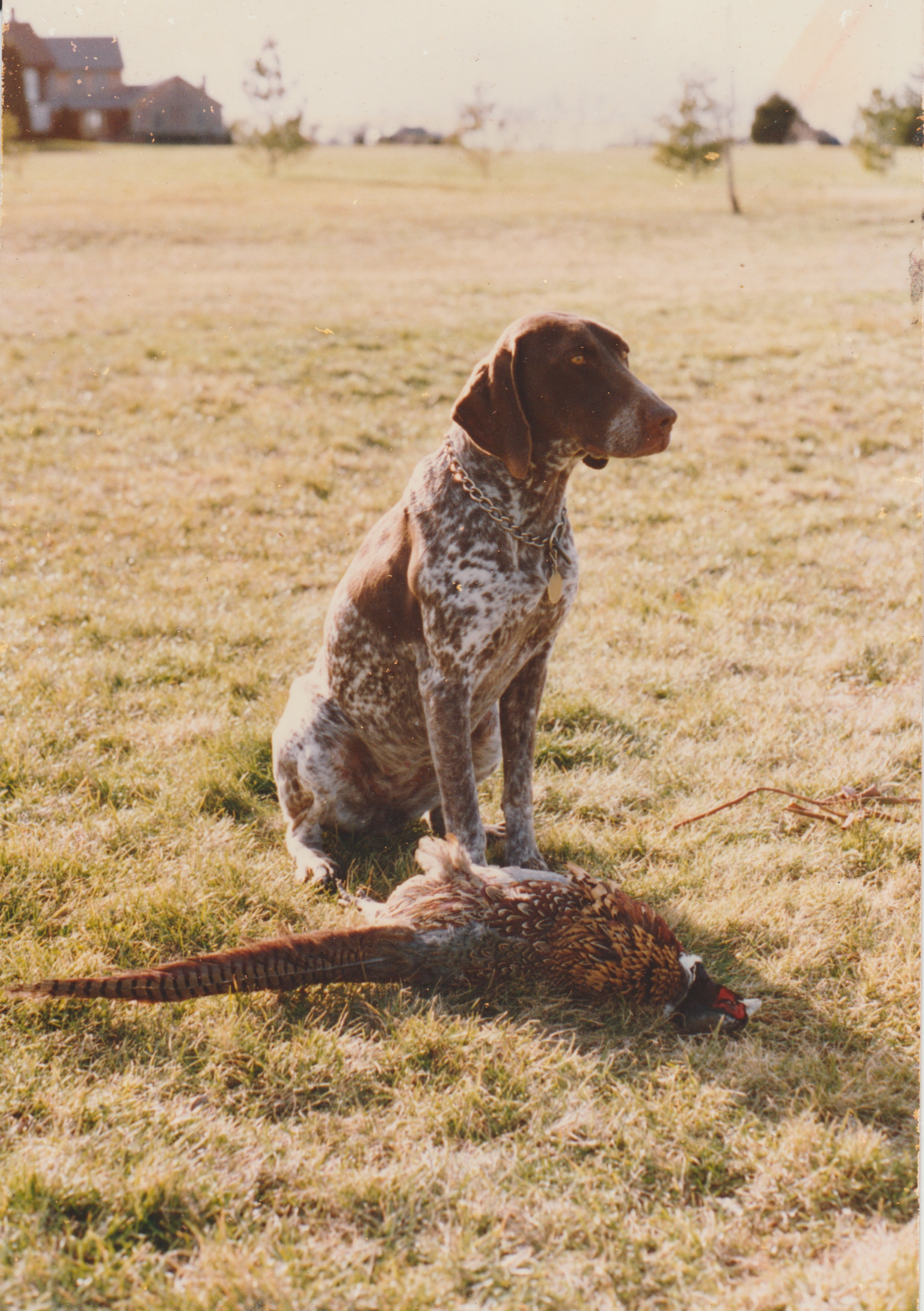 Inga and Pheasant