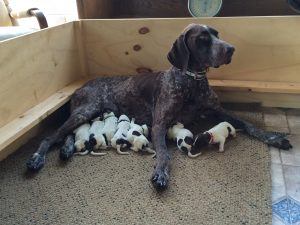 Piper Independence litter