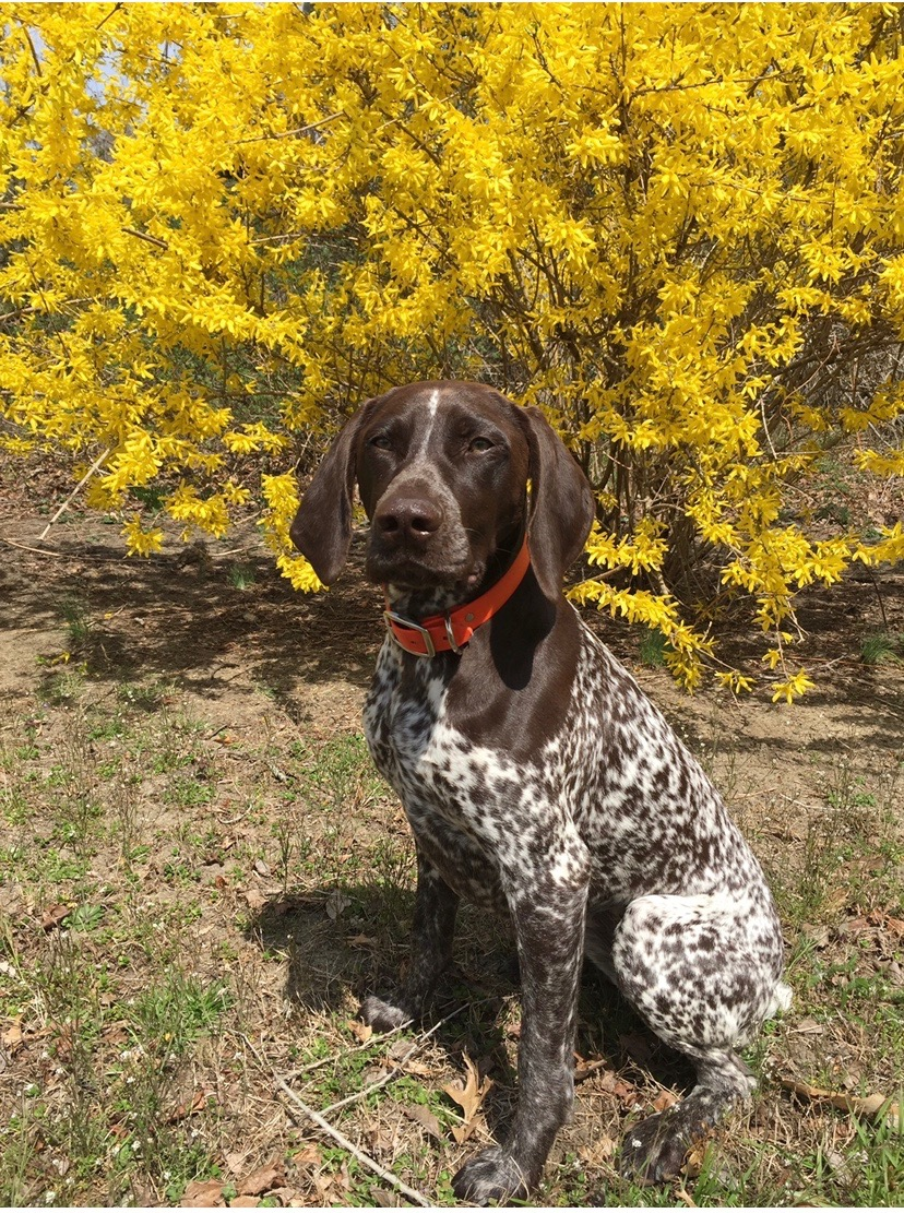 maggie-gsp3