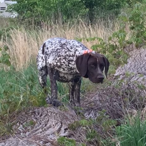 maggie-gsp2